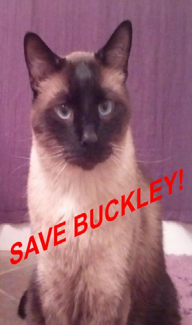 SaveBuckley