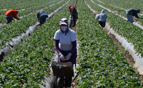 Immigrant Workers 500x308 Is Illegal Immigration the Fault of President Donald Trump?